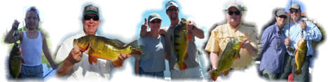 Peacock bass, peacock bass fishing, florida peacock bass, peacock bass guide service
